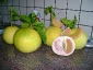 pomelo-Citrus-maxima-05