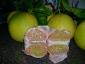 pomelo-Citrus-maxima-07