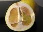 pomelo-Citrus-maxima-08