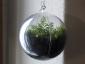 pianta-nella-sfera2