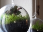 pianta-nella-sfera3