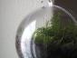 pianta-nella-sfera4