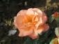 Florablog-Roseto-Botanico-Carla-Fineschi-03.jpg