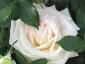 Florablog-Roseto-Botanico-Carla-Fineschi-04.jpg