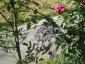 Florablog-Roseto-Botanico-Carla-Fineschi-05.jpg