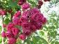 Florablog-Roseto-Botanico-Carla-Fineschi-06.jpg