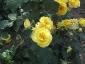 Florablog-Roseto-Botanico-Carla-Fineschi-07.jpg