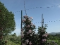 Florablog-Roseto-Botanico-Carla-Fineschi-13.jpg