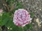 Florablog-Roseto-Botanico-Carla-Fineschi-16.jpg