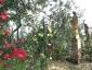 Florablog-Roseto-Botanico-Carla-Fineschi-17.jpg