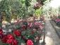 Florablog-Roseto-Botanico-Carla-Fineschi-18.jpg