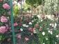 Florablog-Roseto-Botanico-Carla-Fineschi-21.jpg