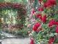 Florablog-Roseto-Botanico-Carla-Fineschi-22.jpg