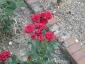 Florablog-Roseto-Botanico-Carla-Fineschi-26.jpg