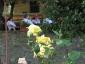 Florablog-Roseto-Botanico-Carla-Fineschi-27.jpg