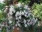 Florablog-Roseto-Botanico-Carla-Fineschi-28.jpg