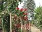 Florablog-Roseto-Botanico-Carla-Fineschi-29.jpg