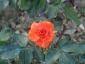 Florablog-Roseto-Botanico-Carla-Fineschi-32.jpg