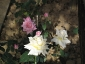 Florablog-Roseto-Botanico-Carla-Fineschi-33.jpg