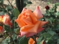Florablog-Roseto-Botanico-Carla-Fineschi-35.jpg