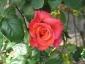 Florablog-Roseto-Botanico-Carla-Fineschi-36.jpg