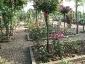 Florablog-Roseto-Botanico-Carla-Fineschi-37.jpg