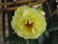Florablog-Roseto-Botanico-Carla-Fineschi-38.jpg