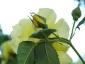 Florablog-Roseto-Botanico-Carla-Fineschi-39.jpg
