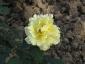 Florablog-Roseto-Botanico-Carla-Fineschi-40.jpg