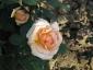 Florablog-Roseto-Botanico-Carla-Fineschi-41.jpg