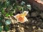 Florablog-Roseto-Botanico-Carla-Fineschi-44.jpg