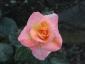Florablog-Roseto-Botanico-Carla-Fineschi-45.jpg