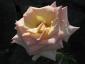 Florablog-Roseto-Botanico-Carla-Fineschi-46.jpg
