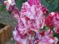 Florablog-Roseto-Botanico-Carla-Fineschi-47.jpg