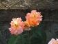 Florablog-Roseto-Botanico-Carla-Fineschi-51.jpg