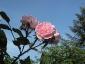 Florablog-Roseto-Botanico-Carla-Fineschi-53.jpg
