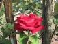 Florablog-Roseto-Botanico-Carla-Fineschi-56.jpg