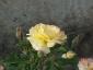 Florablog-Roseto-Botanico-Carla-Fineschi-60.jpg