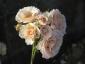 Florablog-Roseto-Botanico-Carla-Fineschi-63.jpg