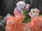 Florablog-Roseto-Botanico-Carla-Fineschi-64.jpg