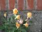 Florablog-Roseto-Botanico-Carla-Fineschi-65.jpg