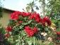 Florablog-Roseto-Botanico-Carla-Fineschi-67.jpg