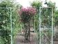 Florablog-Roseto-Botanico-Carla-Fineschi-74.jpg
