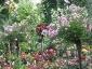 Florablog-Roseto-Botanico-Carla-Fineschi-76.jpg
