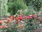 Florablog-Roseto-Botanico-Carla-Fineschi-77.jpg