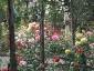 Florablog-Roseto-Botanico-Carla-Fineschi-79.jpg