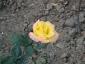 Florablog-Roseto-Botanico-Carla-Fineschi-81.jpg
