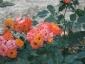 Florablog-Roseto-Botanico-Carla-Fineschi-82.jpg