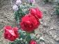 Florablog-Roseto-Botanico-Carla-Fineschi-83.jpg