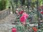 Florablog-Roseto-Botanico-Carla-Fineschi-84.jpg